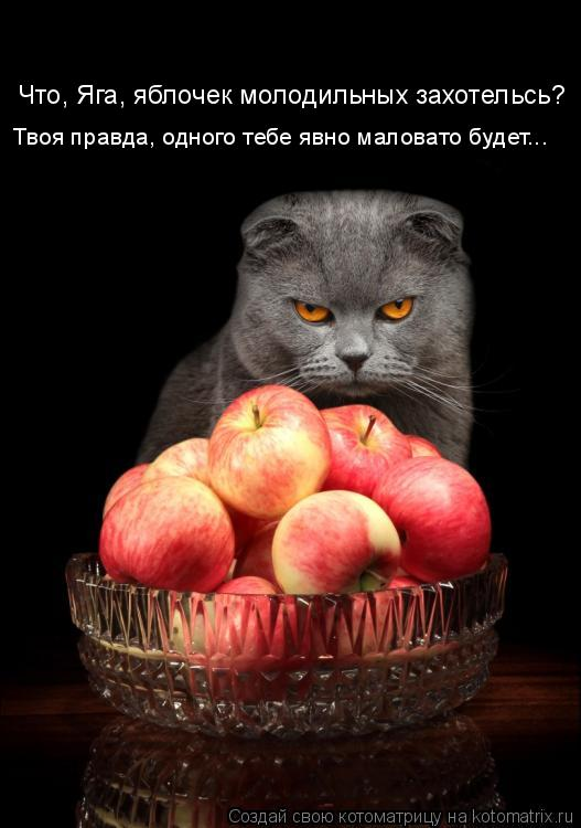 Котоматрица: Что, Яга, яблочек молодильных захотельсь? Твоя правда, одного тебе явно маловато будет...