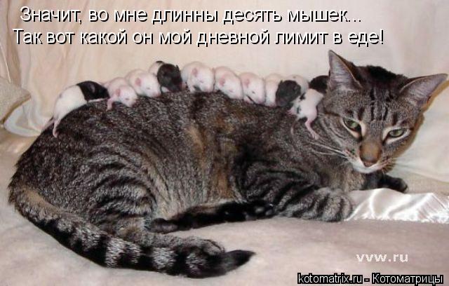 Котоматрица: Значит, во мне длинны десять мышек... Так вот какой он мой дневной лимит в еде!