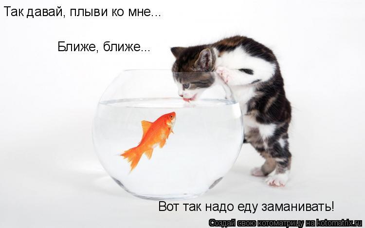 Котоматрица: Так давай, плыви ко мне... Ближе, ближе... Вот так надо еду заманивать!