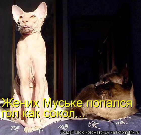 Жених Муське попался  гол как сокол...