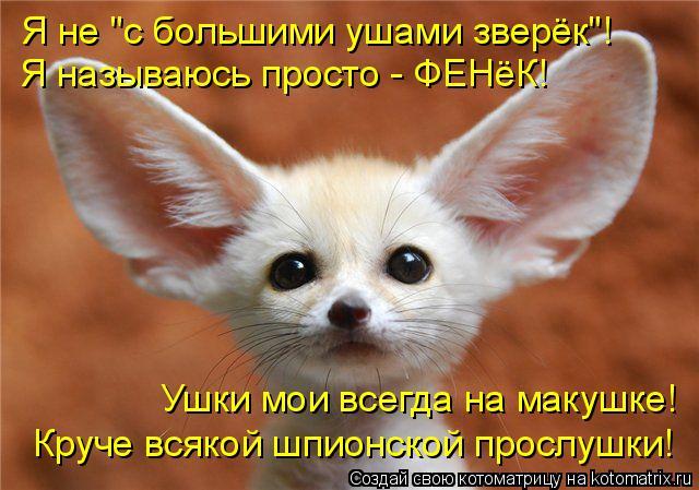 """Котоматрица: Я не """"с большими ушами зверёк""""! Ушки мои всегда на макушке! Круче всякой шпионской прослушки! Я называюсь просто - ФЕНёК!"""