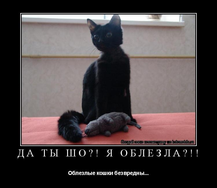 Облезлая кошка