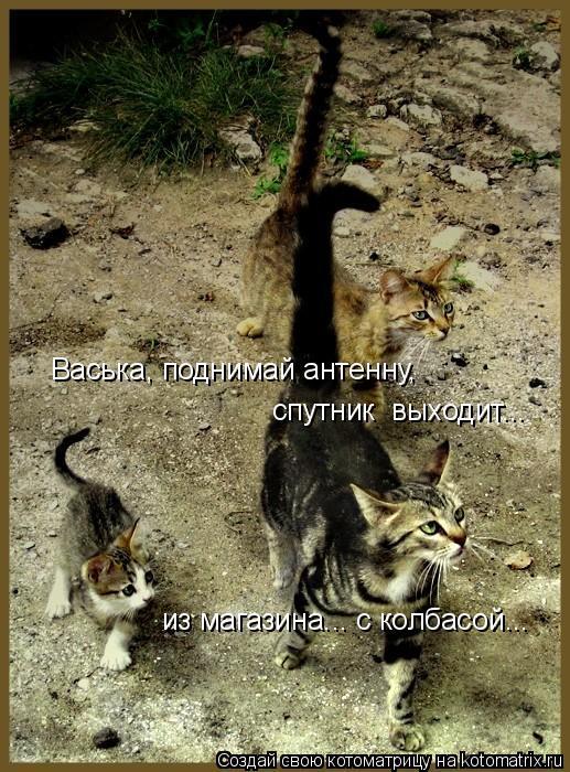 Котоматрица: Васька, поднимай антенну, спутник  выходит... из магазина... с колбасой...