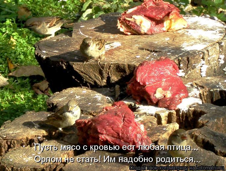Котоматрица: Пусть мясо с кровью ест любая птица... Орлом не стать! Им надобно родиться...