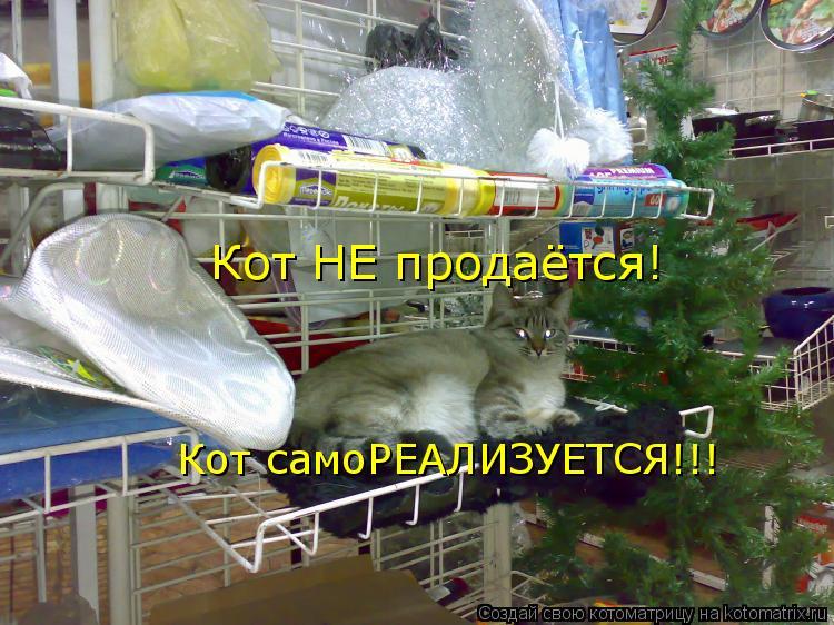 Кот НЕ продаётся! Кот самоРЕАЛИЗУЕТСЯ!!!
