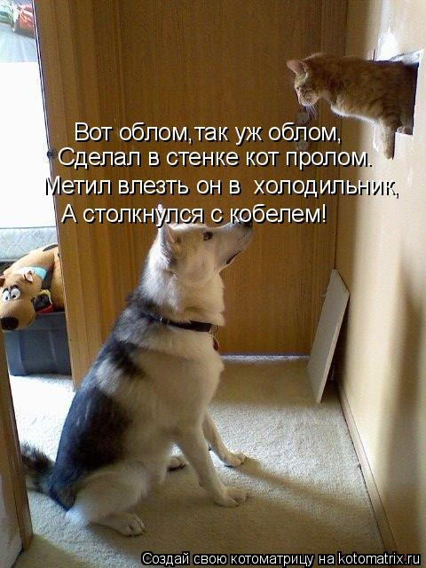 Котоматрица: Вот облом,так уж облом, Сделал в стенке кот пролом. Метил влезть он в  холодильник, А столкнулся с кобелем!