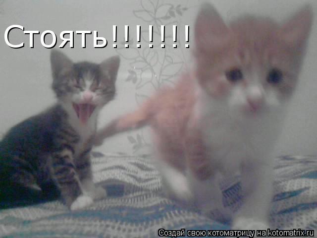 Котоматрица: Стоять!!!!!!!