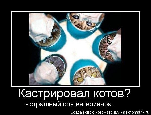 Кастрировал котов? - страшный сон ветеринара...