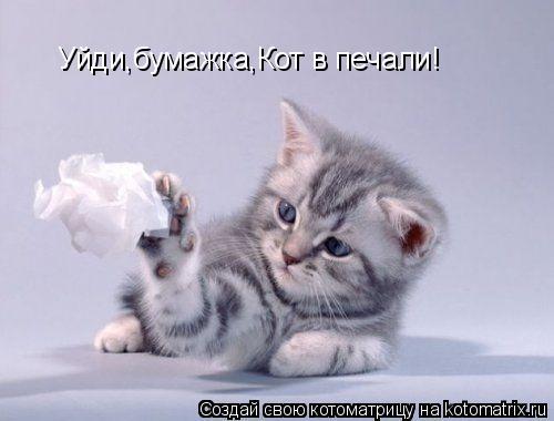 Уйди,бумажка,Кот в печали!
