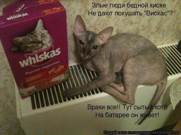 """Котоматрица: Злые люди бедной киске Не дают покушать """"Вискас""""? Враки все!! Тут сытый кот!! На батарее он живет!"""