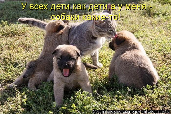 Котоматрица: У всех дети,как дети,а у меня - собаки какие-то!