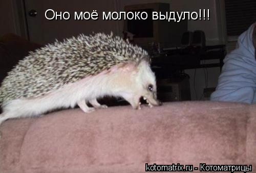 Котоматрица: Оно моё молоко выдуло!!!