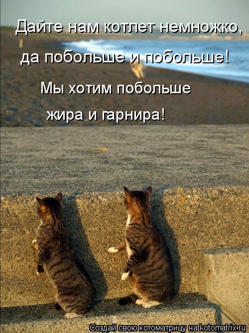 Котоматрица: Дайте нам котлет немножко,  да побольше и побольше! Мы хотим побольше  жира и гарнира!