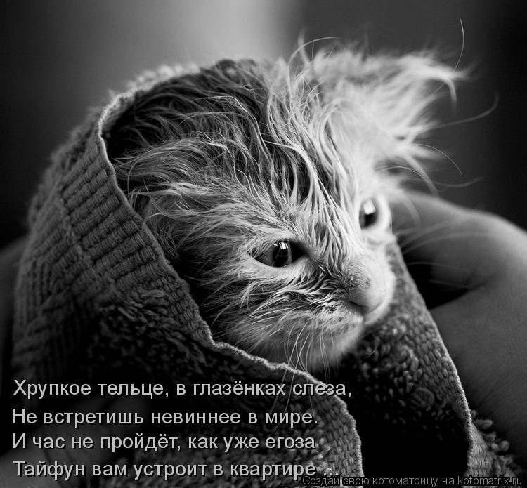 Котоматрица: Хрупкое тельце, в глазёнках слеза, И час не пройдёт, как уже егоза Не встретишь невиннее в мире. Тайфун вам устроит в квартире ...