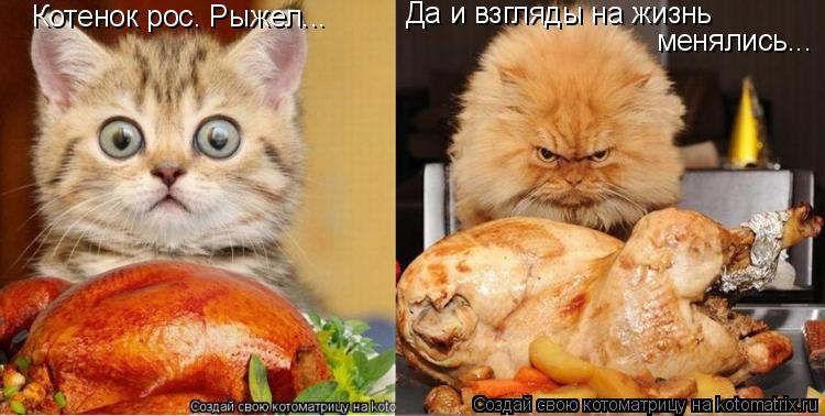 Котоматрица: Котенок рос. Рыжел...  Да и взгляды на жизнь  менялись...