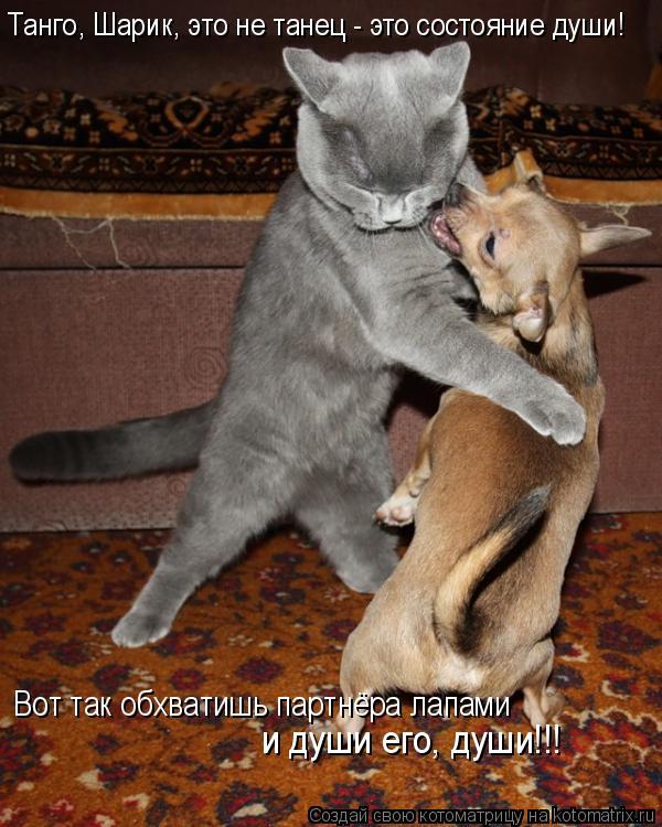 Котоматрица: Танго, Шарик, это не танец - это состояние души! Вот так обхватишь партнёра лапами и души его, души!!!