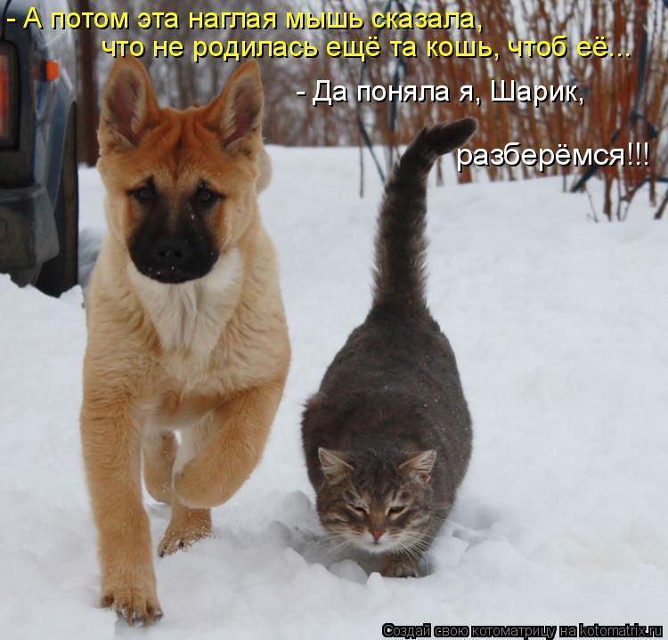 Котоматрица: - А потом эта наглая мышь сказала, что не родилась ещё та кошь, чтоб её... - Да поняла я, Шарик, разберёмся!!!
