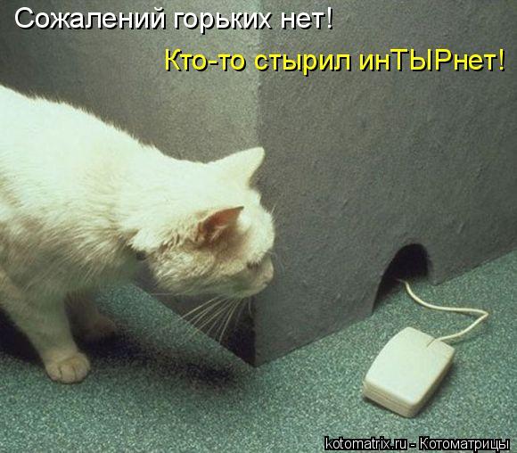 Котоматрица: Сожалений горьких нет! Кто-то стырил инТЫРнет!