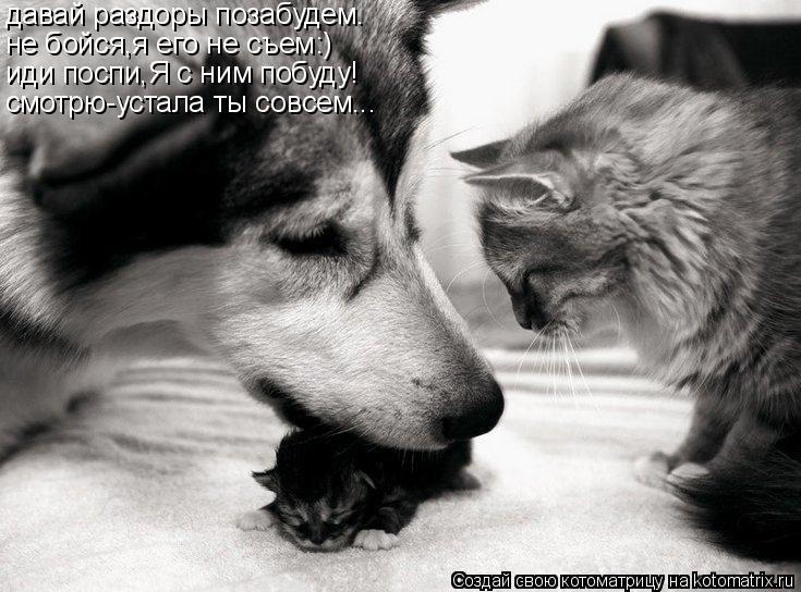 Котоматрица: давай раздоры позабудем. не бойся,я его не съем:) иди поспи,Я с ним побуду! смотрю-устала ты совсем...
