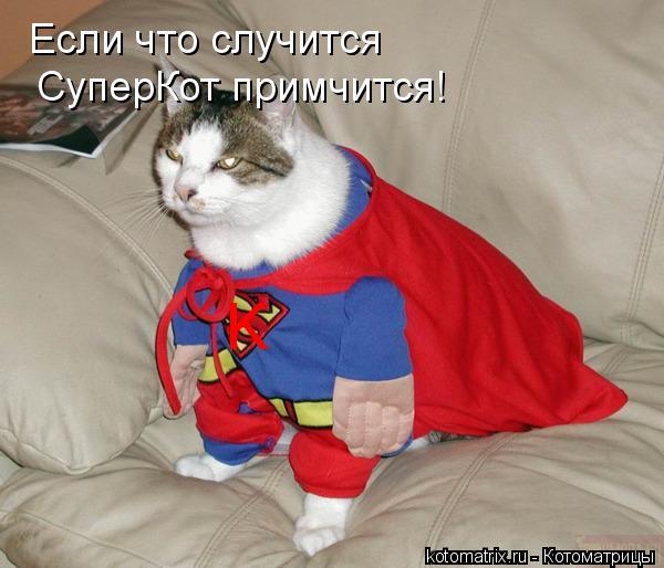 Котоматрица: Если что случится СуперКот примчится! K
