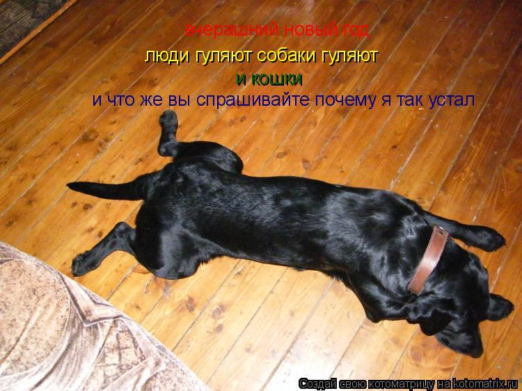 Котоматрица: вчерашний новый год люди гуляют собаки гуляют и кошки и что же вы спрашивайте почему я так устал