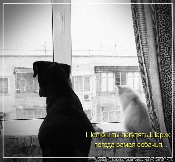 Котоматрица: Шёл бы ты погулять Шарик, погода самая собачья...