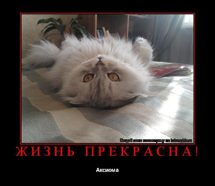 http://kotomatrix.ru/images/lolz/2011/02/08/4.jpg