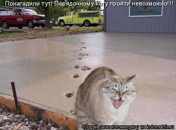 Котоматрица: Понагадили тут! Порядочному коту пройти невозможно!!!