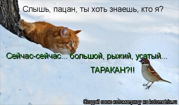 Котоматрица: Слышь, пацан, ты хоть знаешь, кто я? Сейчас-сейчас... большой, рыжий, усатый... ТАРАКАН?!!