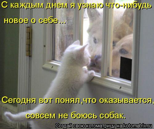 Котоматрица: С каждым днем я узнаю что-нибудь  новое о себе...  совсем не боюсь собак.  Сегодня вот понял,что оказывается,
