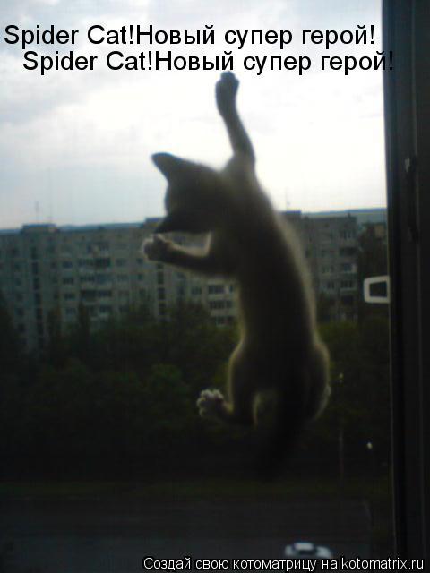 Котоматрица: Spider Cat!Новый супер герой! Spider Cat!Новый супер герой!