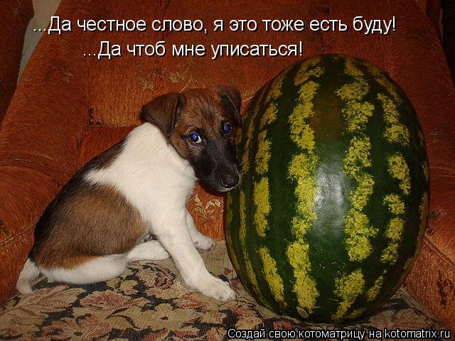Котоматрица: ...Да честное слово, я это тоже есть буду! ...Да чтоб мне уписаться!