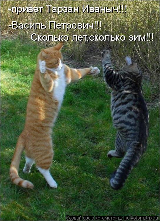Котоматрица: -привет Тарзан Иваныч!!! -Василь Петрович!!! Сколько лет,сколько зим!!!