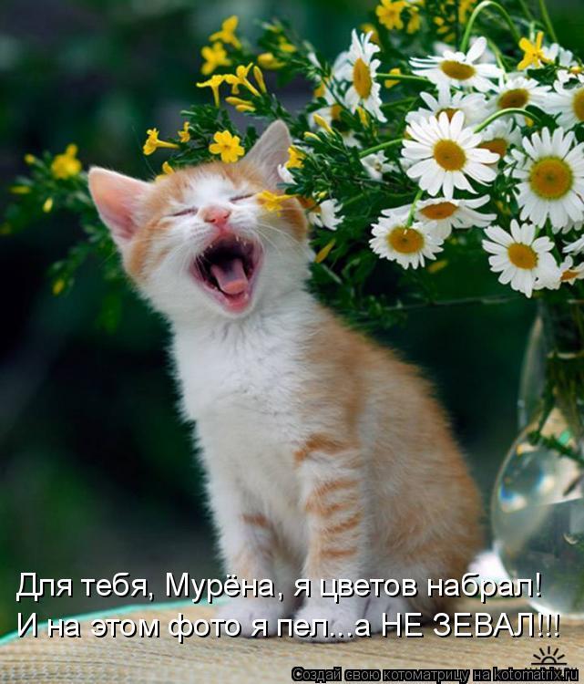 Котоматрица: Для тебя, Мурёна, я цветов набрал! И на этом фото я пел...а НЕ ЗЕВАЛ!!!