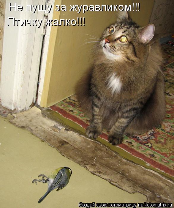 Котоматрица: Не пущу за журавликом!!! Птичку жалко!!!