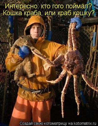 Котоматрица: Интересно: кто гого поймал? Кошка краба, или краб кошку?