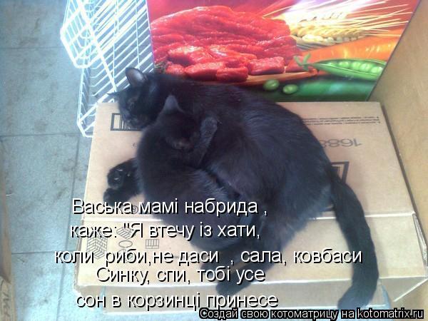 "Котоматрица: коли  риби,не даси  , сала, ковбаси сон в корзинцi принесе Васька мамi набрида , каже: ""Я втечу iз хати, Синку, спи, тобi усе"