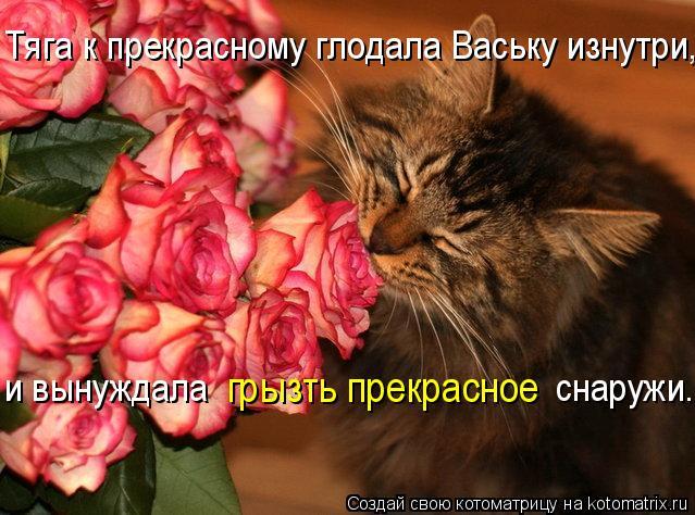 Котоматрица: Тяга к прекрасному глодала Ваську изнутри,  грызть прекрасное и вынуждала                                     снаружи.