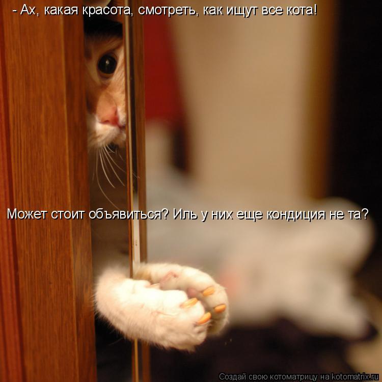 Котоматрица: - Ах, какая красота, смотреть, как ищут все кота! Может стоит объявиться? Иль у них еще кондиция не та?
