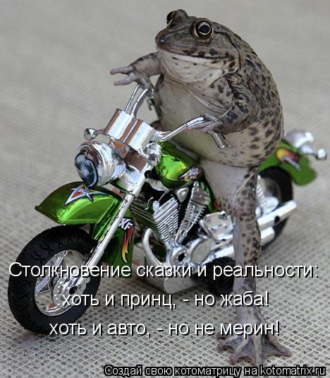 Котоматрица: Столкновение сказки и реальности: хоть и принц, - но жаба! хоть и авто, - но не мерин!