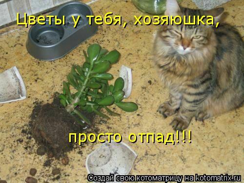 Котоматрица: Цветы у тебя, хозяюшка, просто отпад!!!