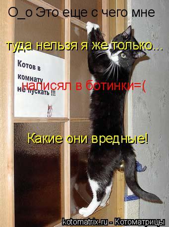 Котоматрица: О_о Это еще с чего мне туда нельзя я же только... написял в ботинки=( Какие они вредные!