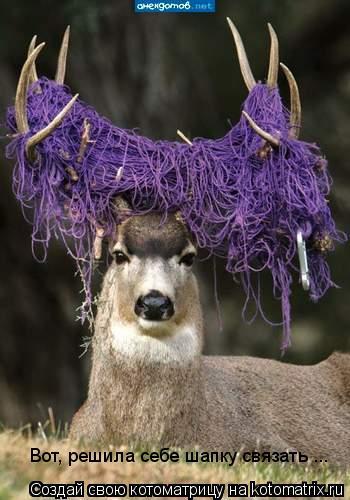 Котоматрица: Вот, решила себе шапку связать ...