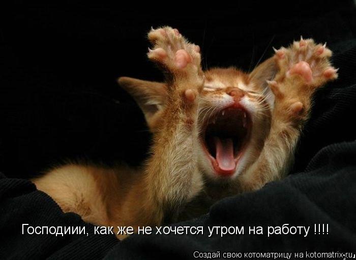 Котоматрица: Господиии, как же не хочется утром на работу !!!!