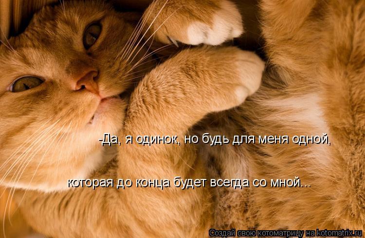 Котоматрица: -Да, я одинок, но будь для меня одной, которая до конца будет всегда со мной...