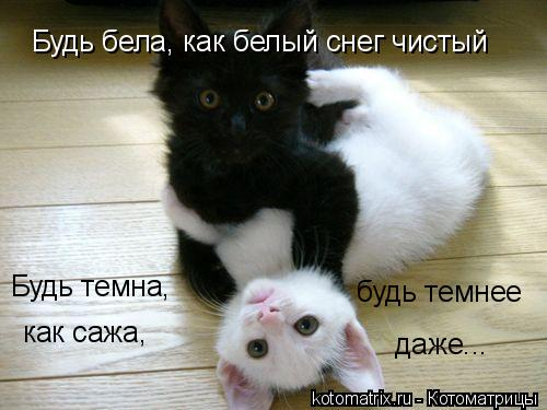 Котоматрица: Будь бела, как белый снег чистый Будь темна, как сажа, будь темнее даже...
