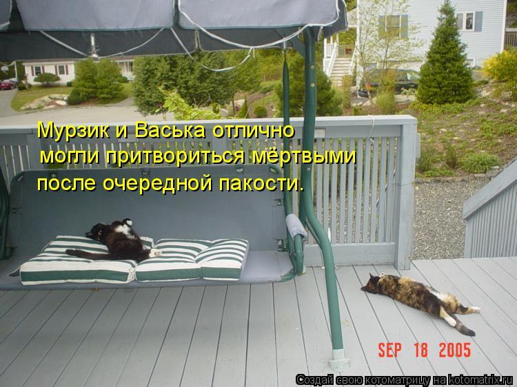 Котоматрица - могли притвориться мёртвыми  Мурзик и Васька отлично  после очередной