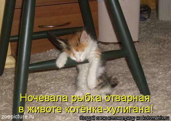Котоматрица: Ночевала рыбка отварная  в животе котёнка-хулигана!