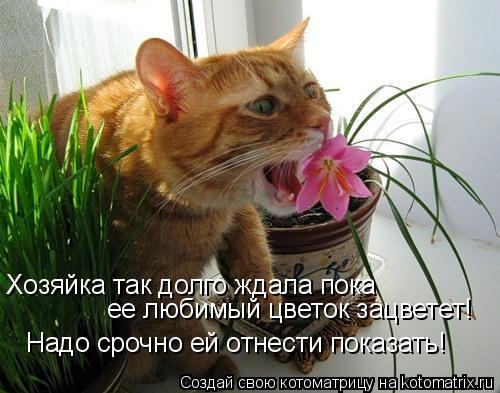 Котоматрица: Хозяйка так долго ждала пока  ее любимый цветок зацветет! Надо срочно ей отнести показать!