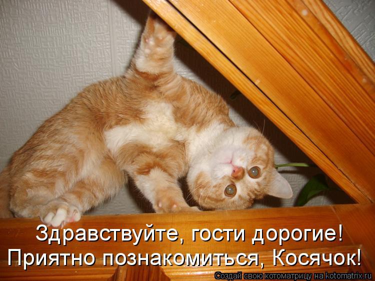 Котоматрица: Здравствуйте, гости дорогие!  Приятно познакомиться, Косячок!